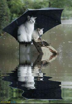 Two Kitties Sharing an Umbrella on a Rainy Day animals rain cats animated animation umbrella pets kitten gif kitty cute animals