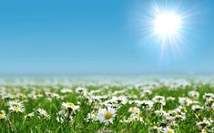 White Flowers Sun And Sky Wallpaper