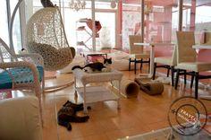 จิบกาแฟ นั่งชิลล์กับเหมียว ที่ร้านกาแฟแมว Charming Cat Café and Pet Shop