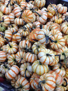 Hooligan pumpkins
