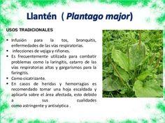 Resultado de imagen de plantas medicinales y para que sirven