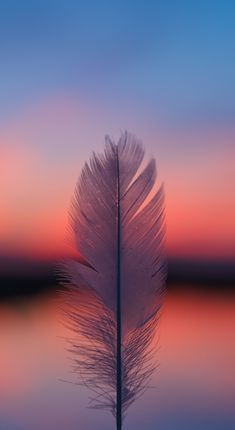 Feather Focus Blur Sunset Mobile Wallpaper (iPhone, Android, Samsung, Pixel, Xiaomi) - Best of Wallpapers for Andriod and ios Feather Wallpaper, Sunset Wallpaper, Iphone Background Wallpaper, Scenery Wallpaper, Colorful Wallpaper, Aesthetic Iphone Wallpaper, Galaxy Wallpaper, Aesthetic Wallpapers, Wallpaper Samsung