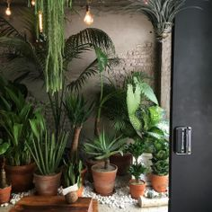 Pin by nikki mualita clark on indoor plants and planters Room With Plants, House Plants Decor, Plant Decor, Indoor Garden, Home And Garden, Plantas Indoor, Decoration Plante, Interior Plants, Outdoor Plants