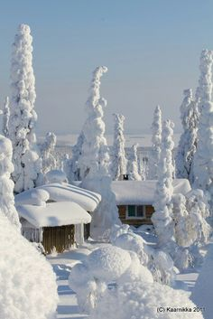 Nieve // Snow