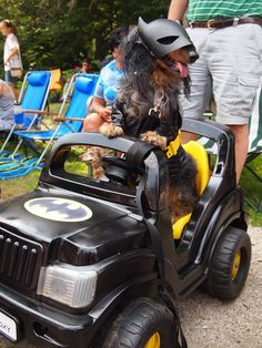 THE DACH KNIGHT -- First Place Best Male at the NE Ohio Dachshund Picnic. (via Dachshund Delights)