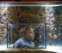 Fish Tank that you can go into