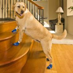 1000 images about dogs boots and socks on pinterest for Hardwood floors good for dogs