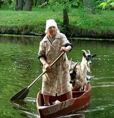 Woman moving goats to an island. Lake district, England.