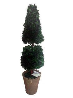 Laura Ashley Preserved Natural Boxwood Cone Topiary, 30-Inch, http://www.amazon.com/dp/B00K2RZ9KM/ref=cm_sw_r_pi_awdm_gRFgvb1KS1K8T