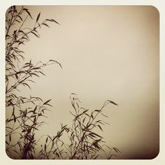 Planta sobre Niebla - @jasepuch