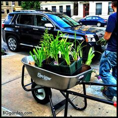 This is how gardeners roll in Harlem :  #GMC and @coronatools #GMCNYC