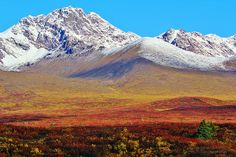 """Fall Tundra Of The Alaska Range, Matanuska-Susitna Borough, Alaska"""
