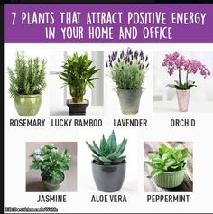 Home Gym – 7 Plants that attract positive energy in your home and office – amzn…. Home Gym – 7 Plants that attract positive energy in your home and office –
