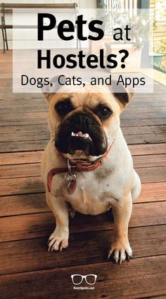 Do you like pets and Hostels? Well, then this one is for you: From Cats, dogs, and APPS!  Here is our article about hostel pets at all 5 Star Hostels including Cocomama, MontacuteBB, The Spot Cosy Hostel, Ani&Haakien Hostel!