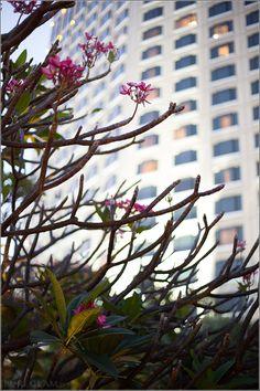 Flower at the enchanting tropical garden - Sheraton Grande Sukhumvit Bangkok – SGS Bangkok - Luxury Collection Hotel - Bangkok, Thailand