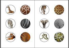 Voici notre jeu dassociation des animaux avec leur pelage (ou autre) à télécharger en PDF Fichier à télécharger en PDF