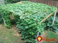 Záhradkári, toto je najlepšia pomôcka pri pestovaní uhoriek: Žiadna chémia na záhrade a dvojnásobná úroda - čaká vás najlepšia sezóna! Plants, Chemistry, Plant, Planets