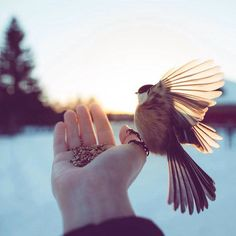 Photography Discover How I Got Seduced By Wildlife Photography How I Got Seduced By Wildlife Photography Hand Photography, Girl Photography Poses, Wildlife Photography, Muslim Pictures, Islamic Pictures, Applis Photo, Scenery Wallpaper, Jolie Photo, Girl Photo Poses