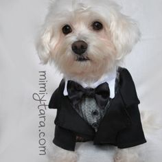 Patrones de suéter para perro | Mimi y Tara Cat Dresses, Dog Sweaters, Whippet, Dog Harness, Pet Clothes, Shih Tzu, Dress Patterns, Cute Dogs, Sims