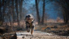 Photograph Running wild by Petr Mašlaň on 500px