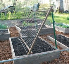 Old bed frame for beans, peas, cucumbers to climb on