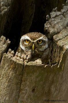 bad pictures, National Geographic | ... their loud calls have been associated with bad omens. – News Watch