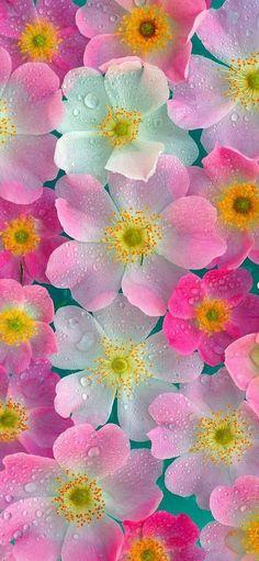 Flowers 💐 💐@_Naina  discovered by Naina on We Heart It