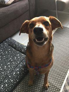 Tina feliz após acupuntura e fisioterapia Veterinária...