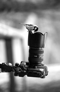 Photo by Sergey Titov - Wildlife - Black and White Photography - Wannabe Photographer