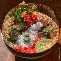 Mini jardim em uma taça                                                                                                                                                                                 Mais