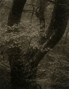 Takeshi Shikama / Silent Respiration of Forests