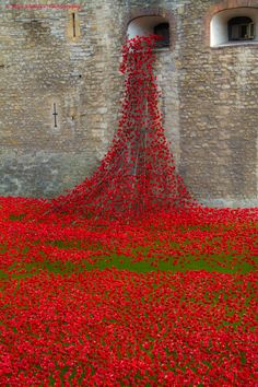 Remembrance Day Poppies at the Tower of London 2014 Places Around The World, The Places Youll Go, Great Places, Places To See, Around The Worlds, Beautiful London, Beautiful World, Beautiful Places, England Uk