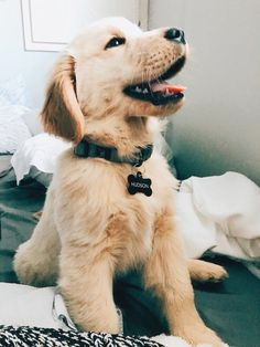 The Versatile Golden Retriever - Champion Dogs Cute Funny Animals, Cute Baby Animals, Funny Dogs, Animals And Pets, Best Dog Food, Best Dogs, Cute Dogs And Puppies, Doggies, Lab Puppies
