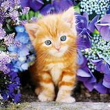 As cute as it gets is a great way to describe this 500 piece Ginger Cat in Flowers jigsaw puzzles. It has an orange tabby kitten. Made in Italy by Clementoni. Cute Kittens, Tabby Kittens, Ginger Kitten, Ginger Cats, Chats Tabby Oranges, Orange Tabby Cats, Beautiful Cats, Cat Breeds, Cute Baby Animals