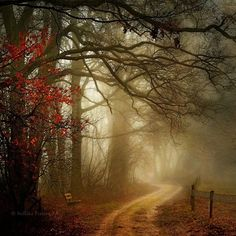 the grimm by nelleke - Forest Photography by Nelleke Pieters