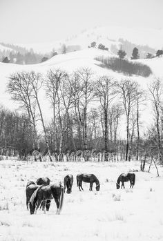 Cowan horses eat their hay on a winter morning where all you hear is silence. Horse Feed, Ranch Life, Winter Day, Beautiful Sunset, Cattle, Horses, Cold, Photography, Animals
