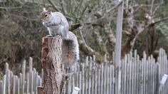 cinemagraph squirrel moving pictures gif