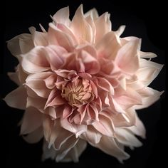 #dahliacafèaulait #flowers # coldporcelain #sugarflowers