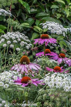 Plantingdesign | Tuinontwerp . Ammi & Echinacea - Planting Design by John Schoolmeesters