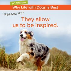 #60Reasons Why Life With Dogs is Best: Reason 19 - They allow us to be inspired. Click the link below the image to read what one dog-lover was inspired to do. How about you? What has your dog inspired in you?