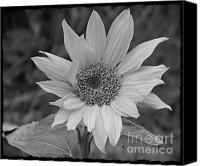 BW Sunflower Mixed Media by Chalet Roome-Rigdon - BW Sunflower Fine Art Prints and Posters for Sale