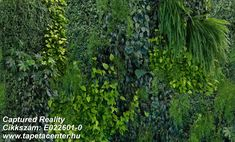 Create a natural feel and greenery all year round with GREEN WALL. Lush green foliage never before so realisticaly reproduced. Unique Wallpaper, Photo Wallpaper, Wall Wallpaper, Fresco, Apartment Projects, Natural Interior, Wallpaper Online, Plant Wall, Lush Green