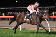 The world's most famous racehorse, Black Caviar, is pregnant.