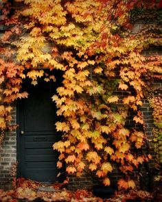Autumn Leaves Photograph - vines, rustic, building, golden, brick wall, 8x10 Black Friday Cyber Monday on Etsy