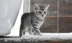 Ein acht Wochen altes Kätzchen by Evelyne  on 500px