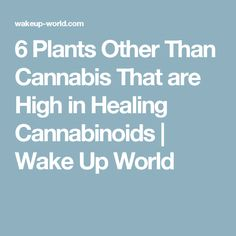 6 Plants Other Than Cannabis That are High in Healing Cannabinoids | Wake Up…