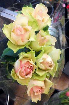 zelené růže s růžovým nádechem (77 pieces) Lidl, Potato Salad, Jigsaw Puzzles, Cabbage, Roses, Vegetables, Ethnic Recipes, Food, Pink