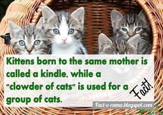 Cat Facts - 10 Amazing facts about cats - Fact-o-Rama Group Of Cats, Cat Ages, 6 Month Olds, Anything Is Possible, Amazing Facts, Cat Life, How To Take Photos, Did You Know, Funny Things