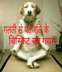 You have already voted. Similar posts: Funny Dog Fashion Photo Funny Monkey Photo New Funny Photo Patanjali Security Very Funny Audi car Photo Very Funny Photo Whatsapp Funny Men and Cat Photo Funny Dog Jokes, Funny Jokes In Hindi, Some Funny Jokes, Funny Qoutes, Crazy Funny Memes, Really Funny Memes, Funny Facts, Funny Dogs, Funny Men