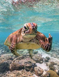 sea life - sea life photography - sea life underwater - sea life artwork - sea life watercolor sea l Baby Sea Turtles, Cute Turtles, Ninja Turtles, Save The Sea Turtles, Cute Little Animals, Cute Funny Animals, Turtle Love, Happy Turtle, Tier Fotos